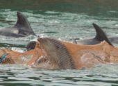 Двух мертвых дельфинов обнаружили на пляже в Сухуме