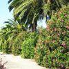 В Абхазии предложили запретить весенние посадки многолетних культур
