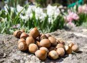Кабинет министров Абхазии отменил экспортные пошлины на лесной орех