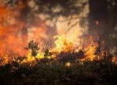 Вертолет МЧС России прибыл в Абхазию для тушения лесных пожаров