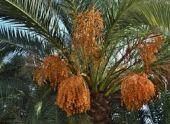 В Сухуме начали посадку итальянских пальм