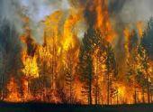 Новые очаги лесных пожаров зафиксированы в трех районах Абхазии