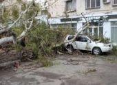 Эвкалипт рухнул на дом в Сухуме