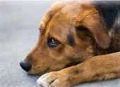 Отстрел бездомных животных запретили в Сухуме