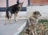 Власти Гагры решили помещать бродячих собак в приют