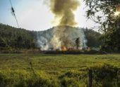 В Абхазии во время тушения природного пожара обнаружили боеприпасы