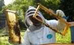 Реестр производителей меда будет создан в Абхазии