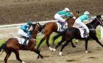 Скачки на Кубок президента Абхазии отложили на неделю