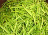 Редкое растение из Индии начали выращивать в Абхазии