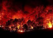 Лесные пожары в Гагрском и Гудаутском районе потушены