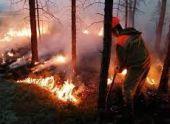 В Абхазии спасатели ликвидировали крупный лесной пожар